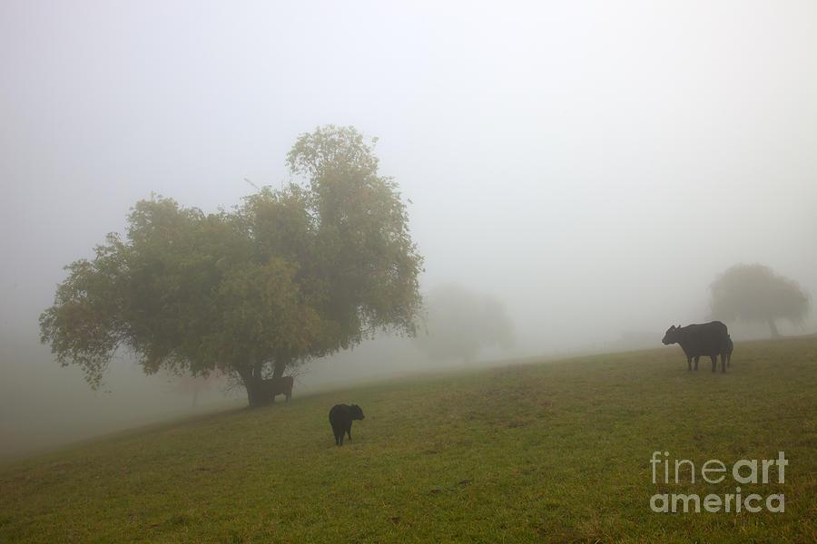 Rural Fog Photograph