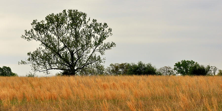 Rural Landscape Photograph