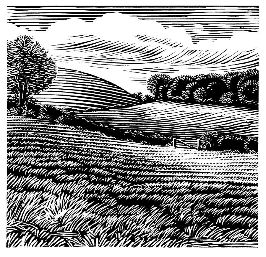 Rural Landscape, Woodcut Photograph