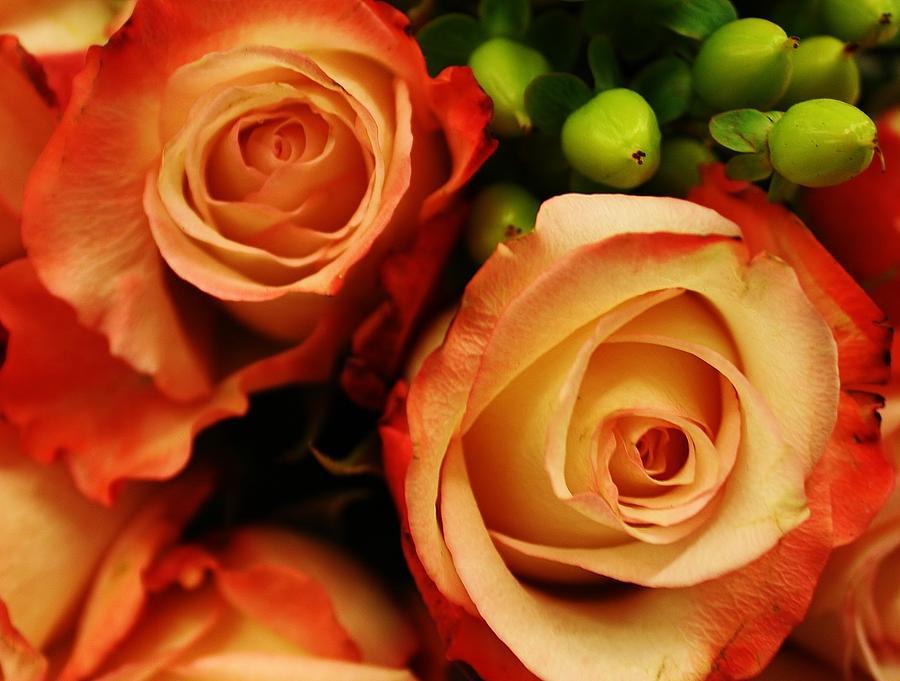 Rustic Roses Photograph