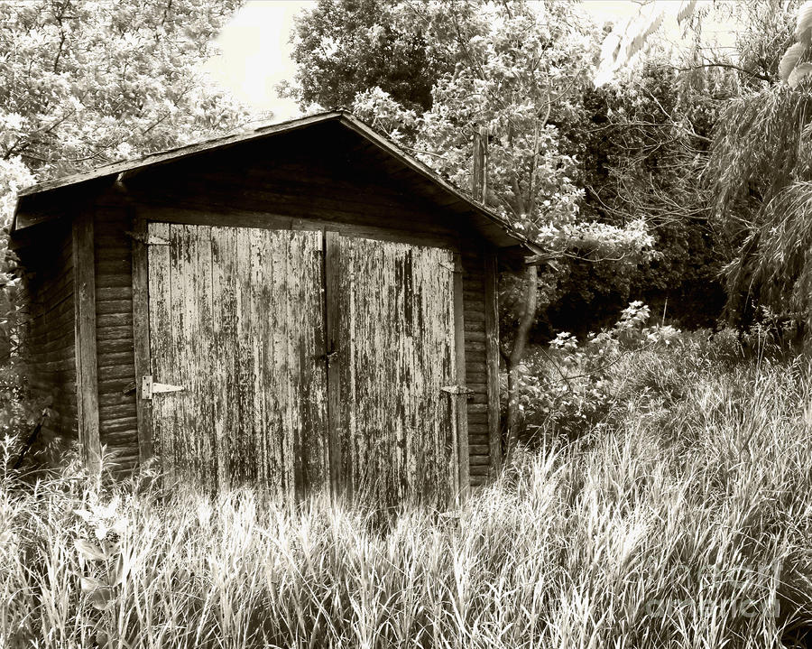 Rustic Shed Photograph