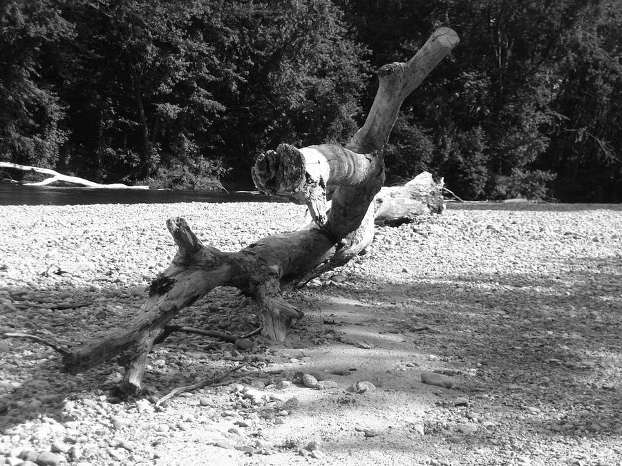 Saco River B And W Photograph
