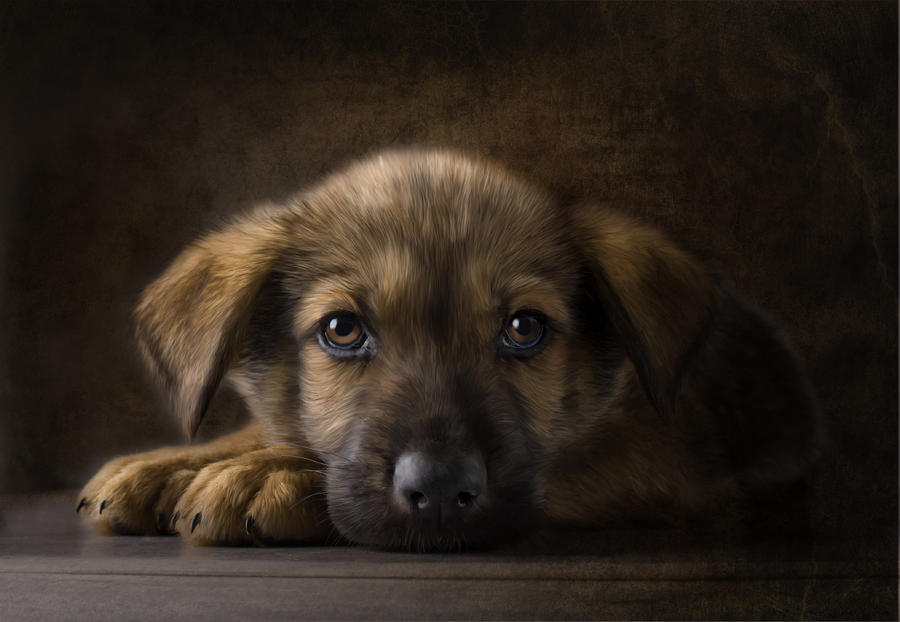 Sad Puppy Digital Art  - Sad Puppy Fine Art Print