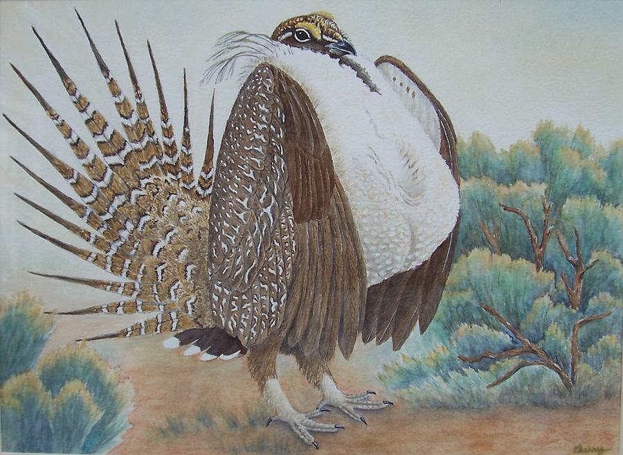 Sage grouse drawing - photo#44