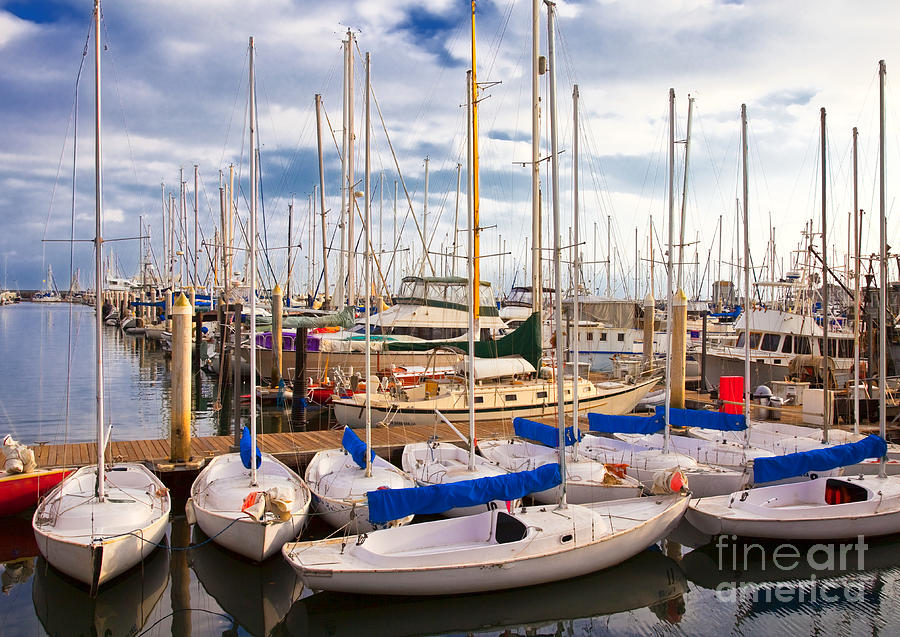 Sailoats Docked In Marina Photograph  - Sailoats Docked In Marina Fine Art Print