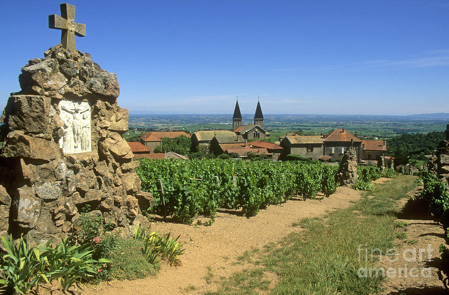 Saint Joseph En Beaujolais. France Photograph  - Saint Joseph En Beaujolais. France Fine Art Print