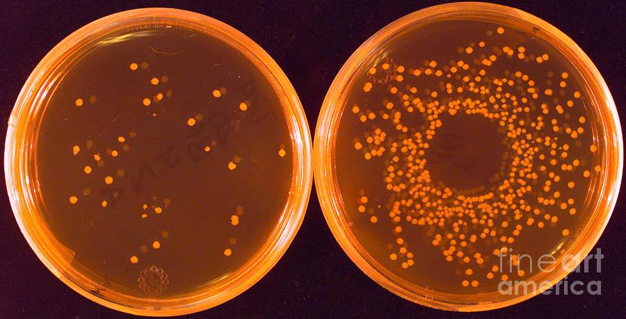 Salmonella Photograph