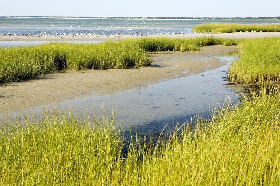 Salt Marsh Habitat With Flock Of Birds Photograph