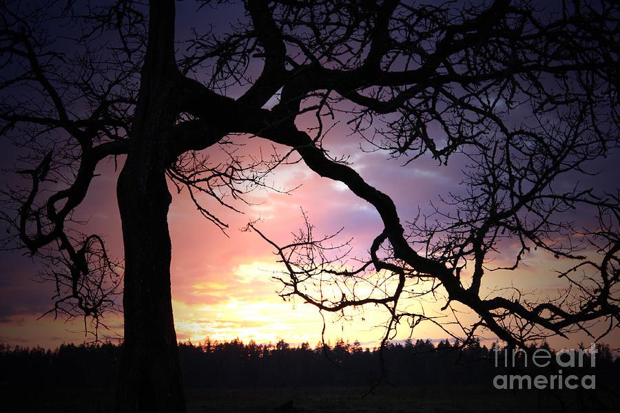 Samhain Photograph