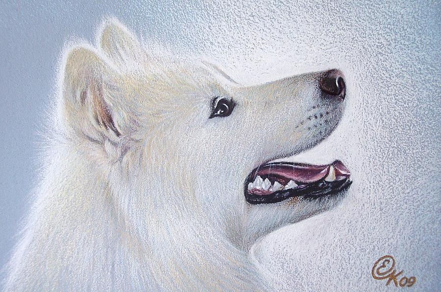 Samoyed Drawing  - Samoyed Fine Art Print