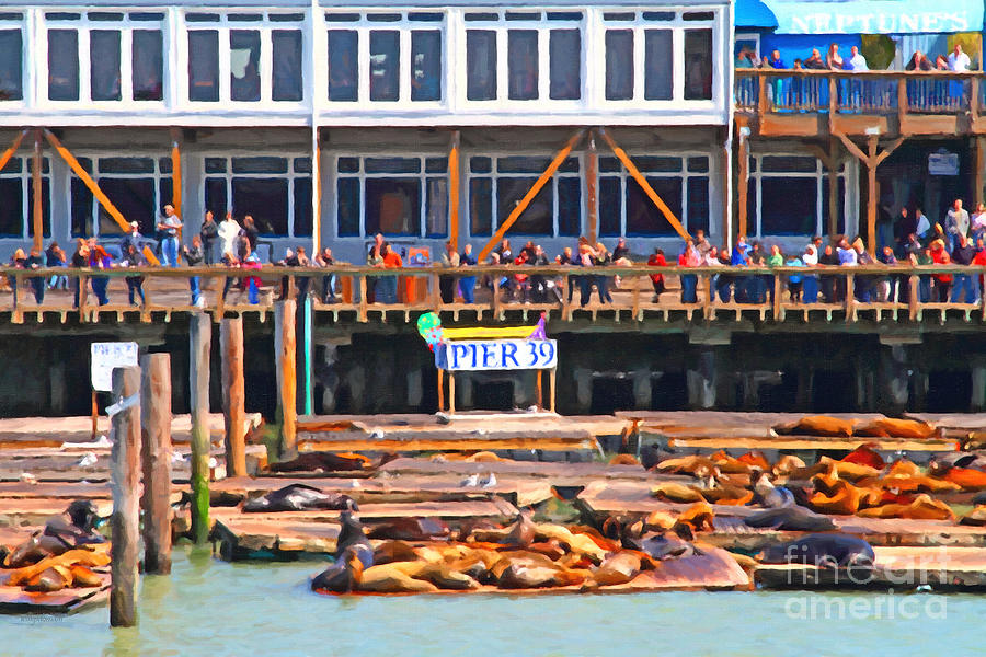 San Francisco Pier 39 Sea Lions . 7d14272 Photograph  - San Francisco Pier 39 Sea Lions . 7d14272 Fine Art Print
