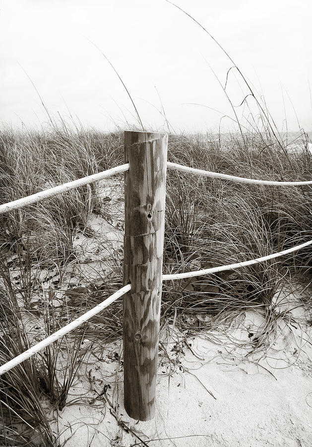 Sand And Grass Photograph