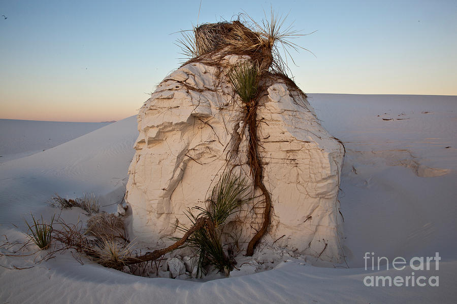 White Sands Photograph - Sand Pedestal With Yucca by Greg Dimijian