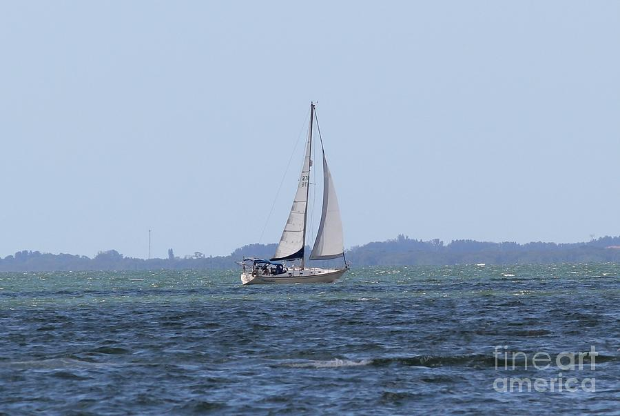 Sarasota Sailing Photograph