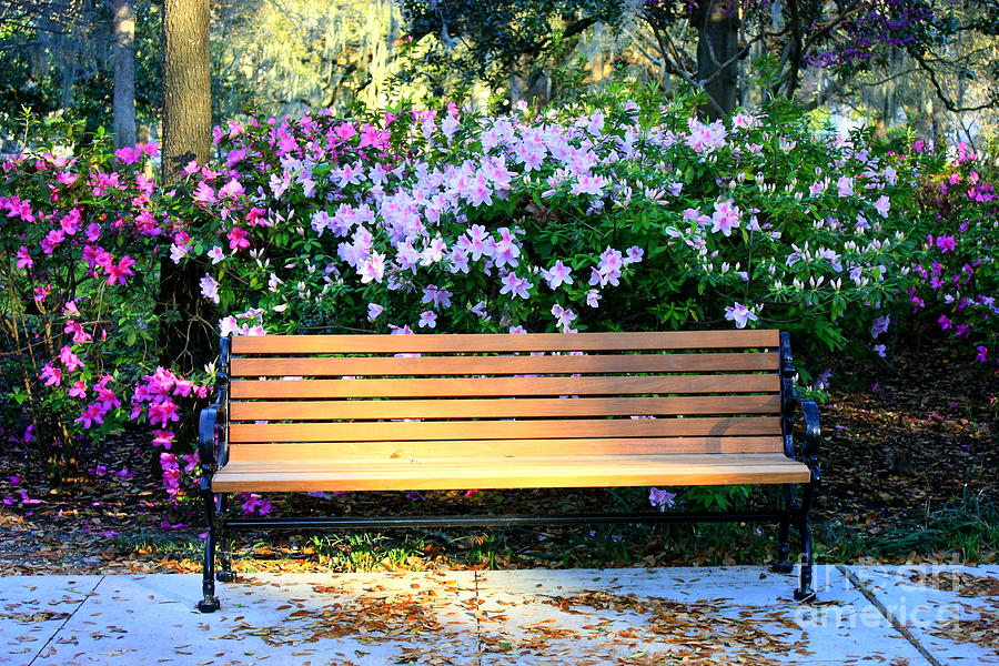 Savannah Bench Photograph  - Savannah Bench Fine Art Print