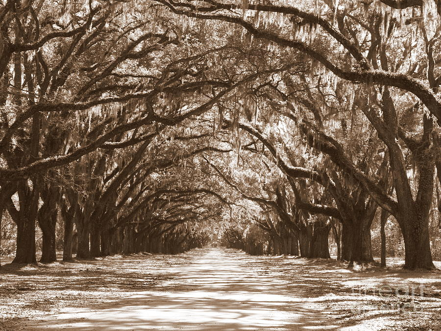 Savannah Sepia - Glorious Oaks Photograph  - Savannah Sepia - Glorious Oaks Fine Art Print