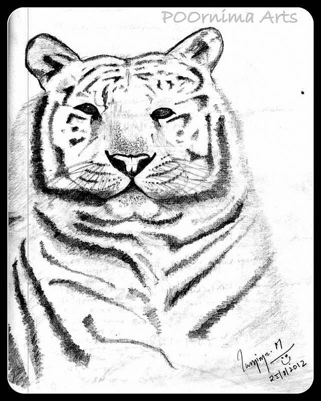 Tiger Drawing - Save Tigers by Poornima M