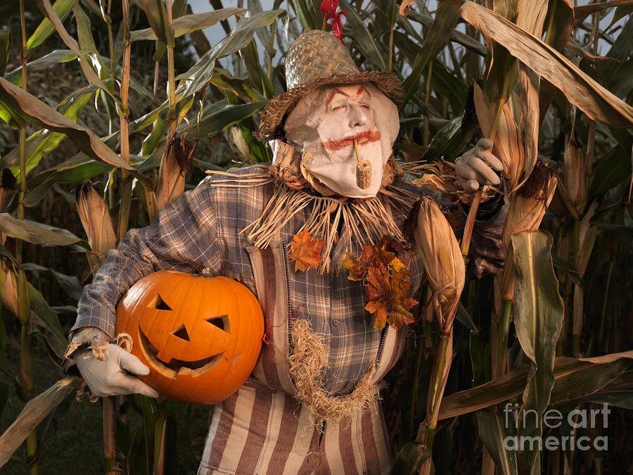 Scarecrow With A Carved Pumpkin  In A Corn Field Photograph