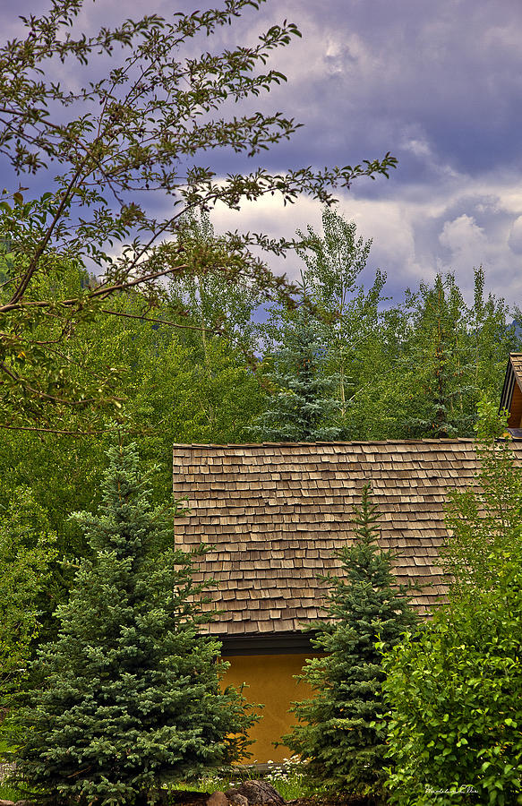 Scene Through The Trees - Vail Photograph