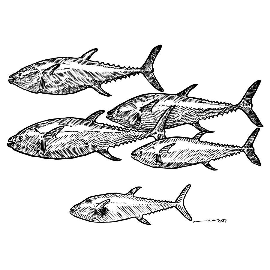school of fish drawing