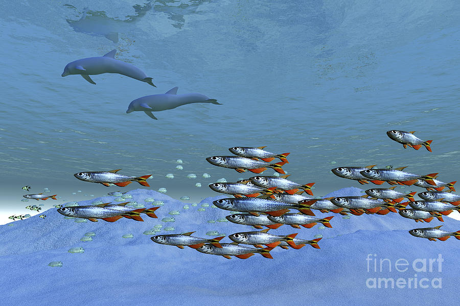 Schools Of Fish Swim In The Blue Ocean Digital Art  - Schools Of Fish Swim In The Blue Ocean Fine Art Print