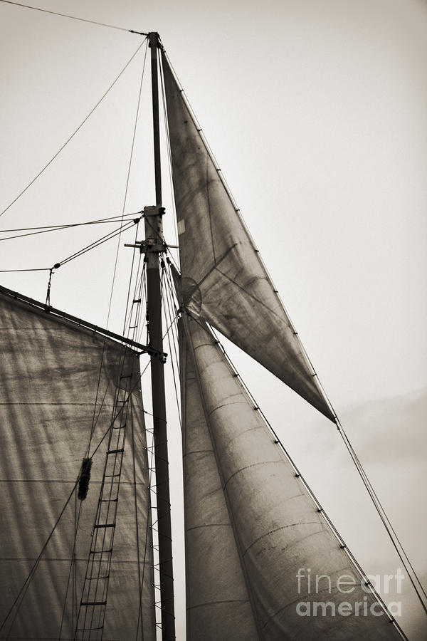 Schooner Pride Tall Ship Yankee Sail Charleston Sc Photograph  - Schooner Pride Tall Ship Yankee Sail Charleston Sc Fine Art Print