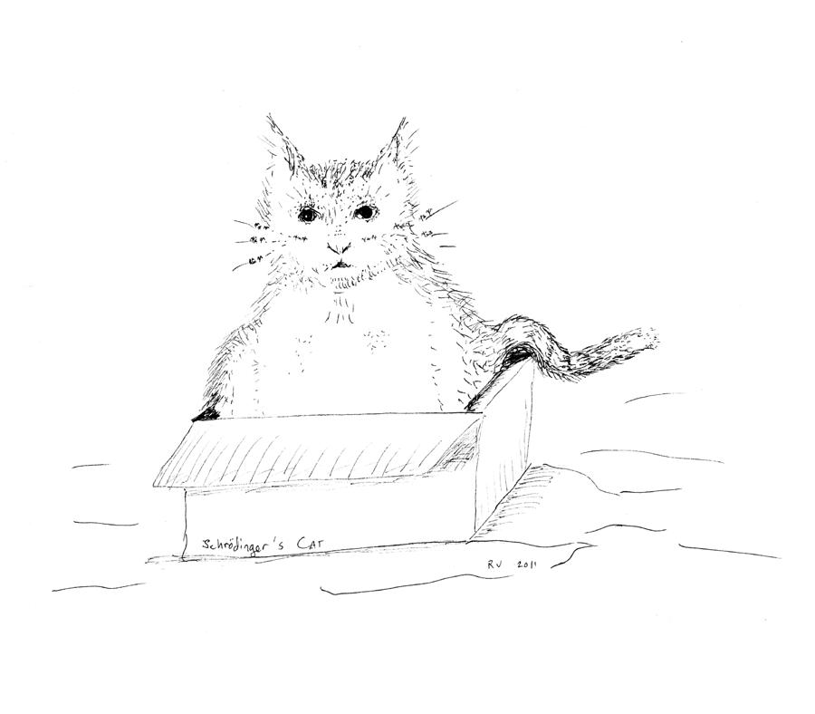 Schrodinger Cat Drawing  - Schrodinger Cat Fine Art Print