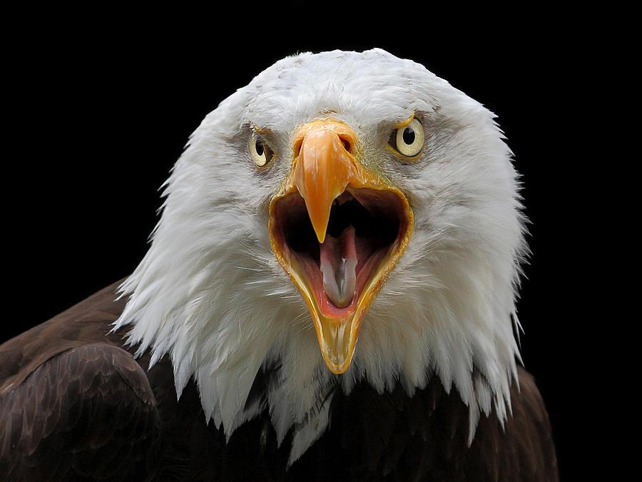 Screaming Eagle 2015 Autos Post
