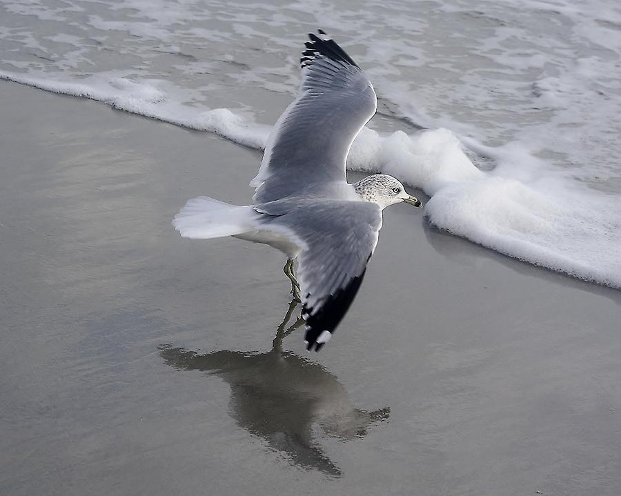Sea Gull By The Sea Shore Photograph