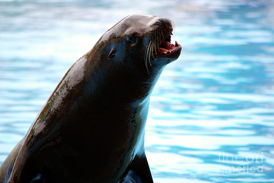 Animal Photograph - Sea-lion by Carlos Caetano