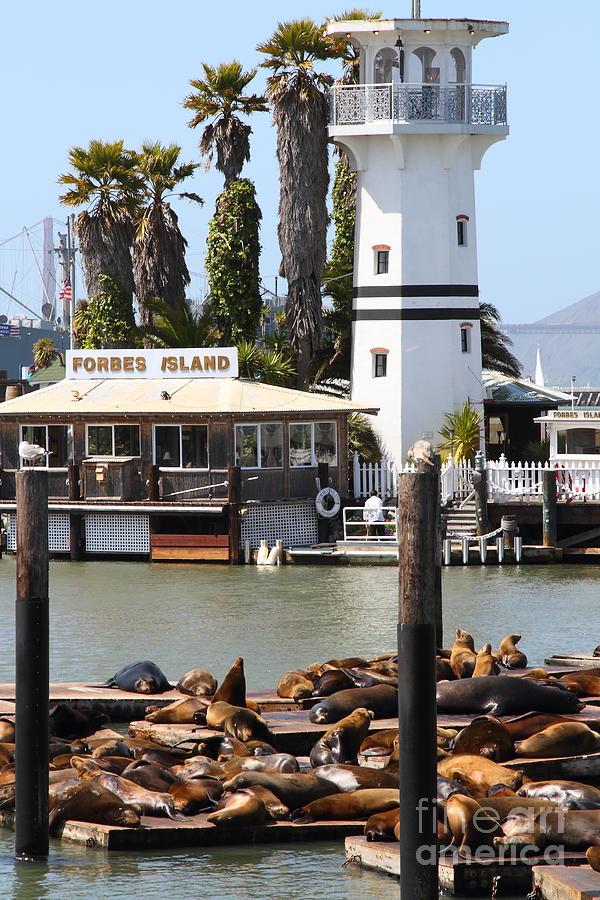 San Francisco Photograph - Sea Lions At Pier 39 San Francisco California . 7d14296 by Wingsdomain Art and Photography