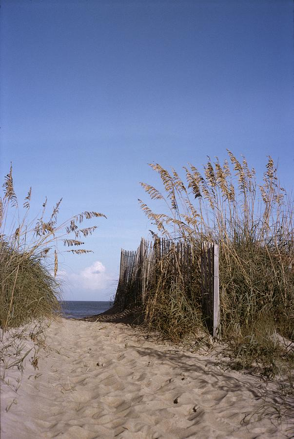 Sea Oats Line The Path Photograph