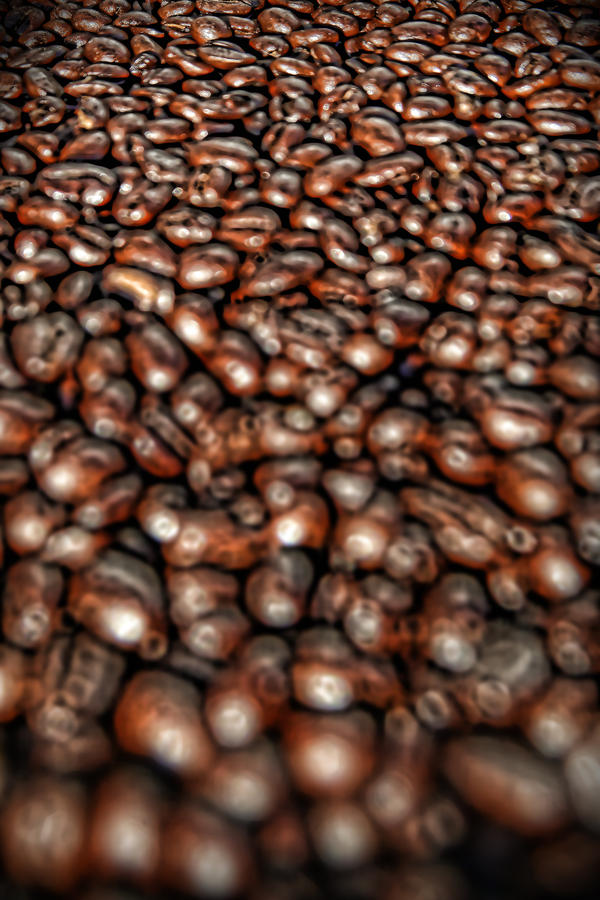 Sea Of Beans Photograph