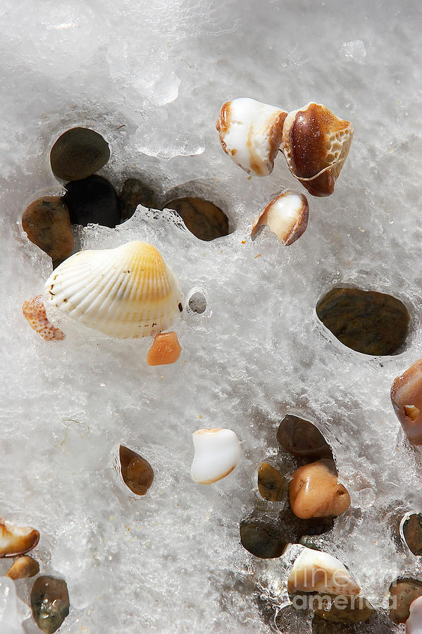 Sea Shells Rocks And Ice Photograph