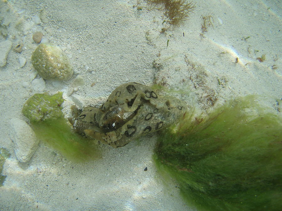 Sea Slug Photograph