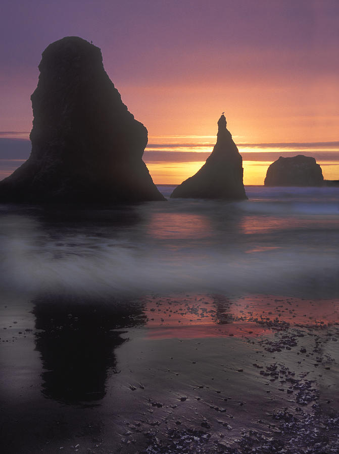 Sea Stacks Off The Oregon Coast Photograph  - Sea Stacks Off The Oregon Coast Fine Art Print
