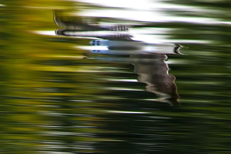 Seagull Prints Photograph - Seagull 2 Moewe 2 by H a r a l d B e r t l i n g