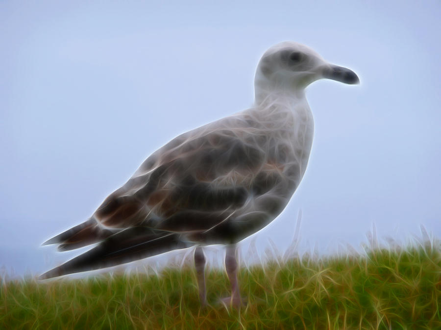Cindy Photograph - Seagull Abstract by Cindy Wright