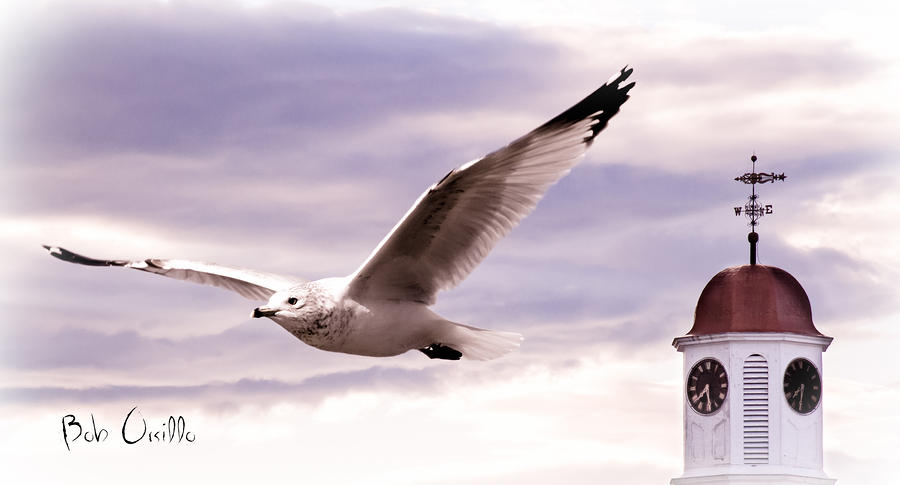 Seagull And Clock Tower Photograph  - Seagull And Clock Tower Fine Art Print