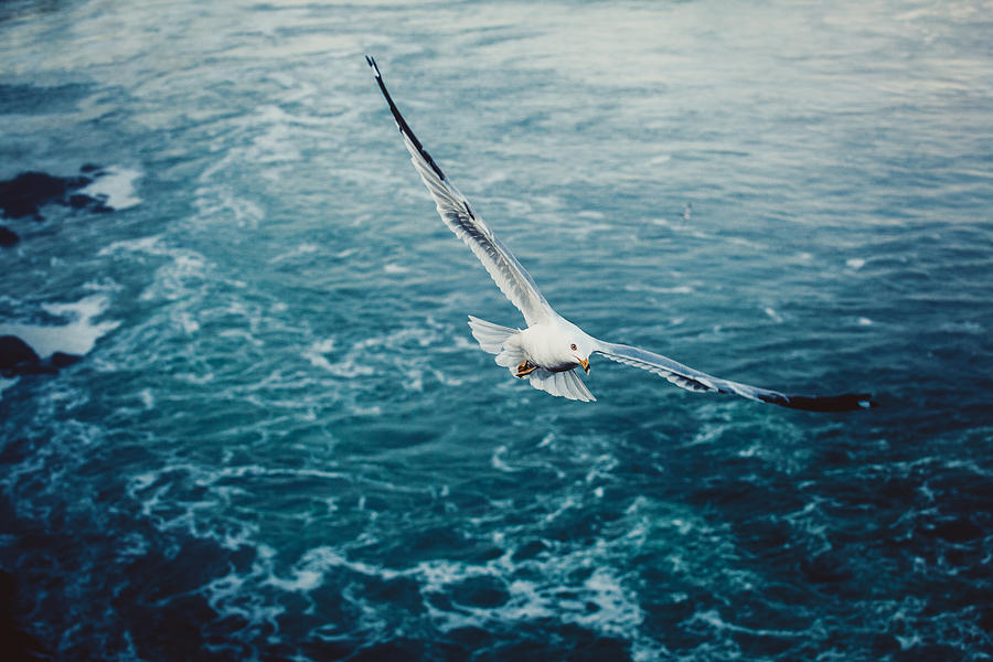 Seagull Bird Flying Over Sea Photograph  - Seagull Bird Flying Over Sea Fine Art Print