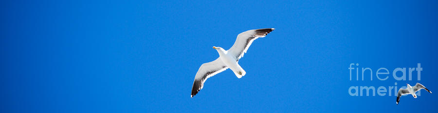 Seagull Blue Photograph