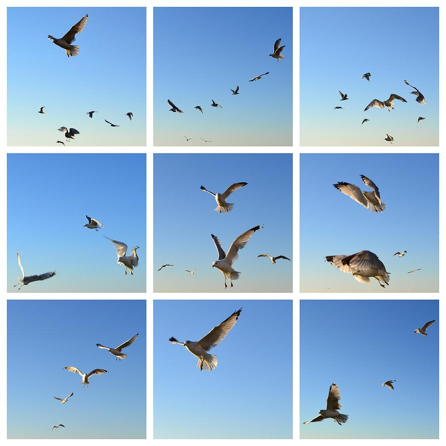 Seagull Collage 2 Photograph