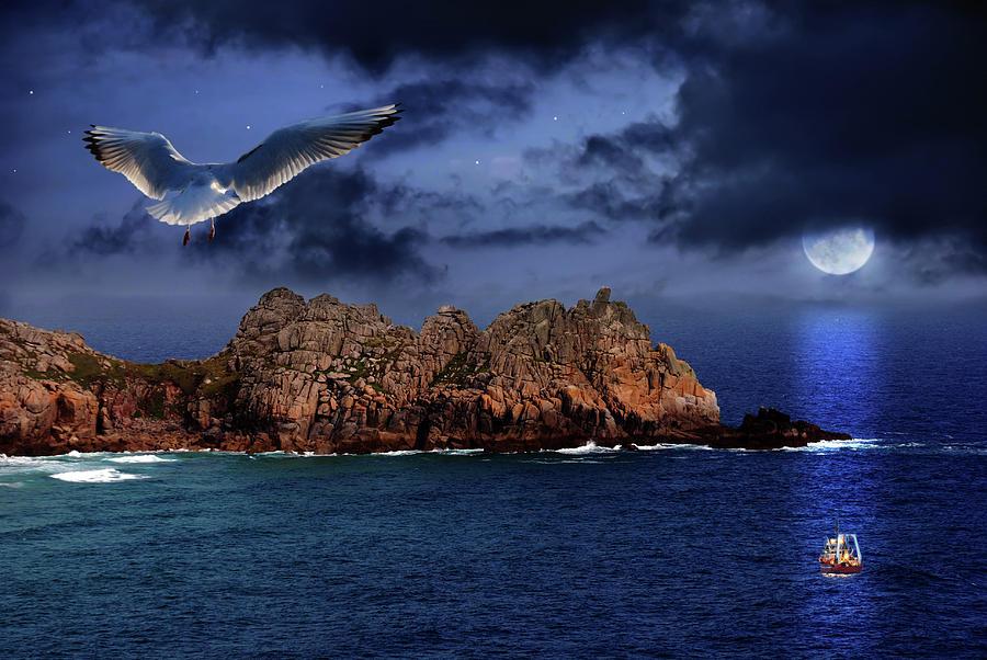 Seagull Flight Photograph