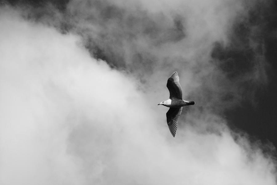 Seagull In The Clouds Photograph