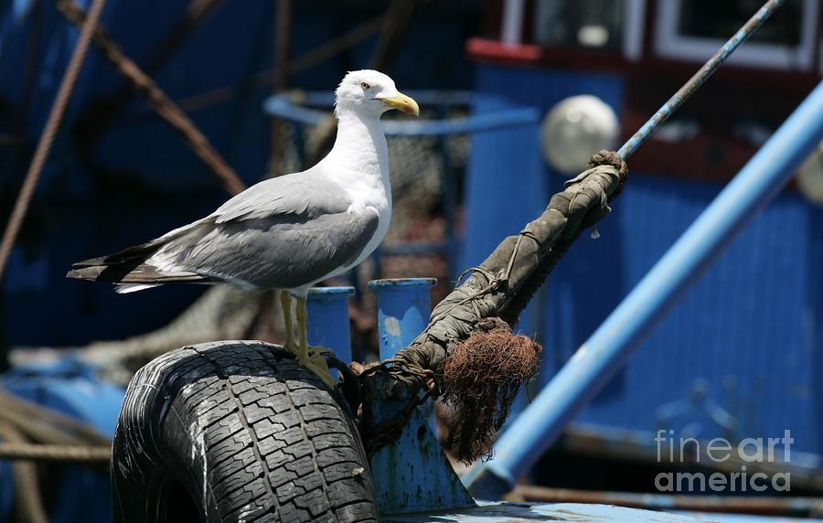 Seagull - Last Times