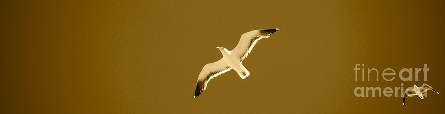 Seagull Sepia Photograph