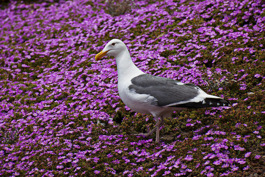 Seagull Standing Among Flowers Photograph
