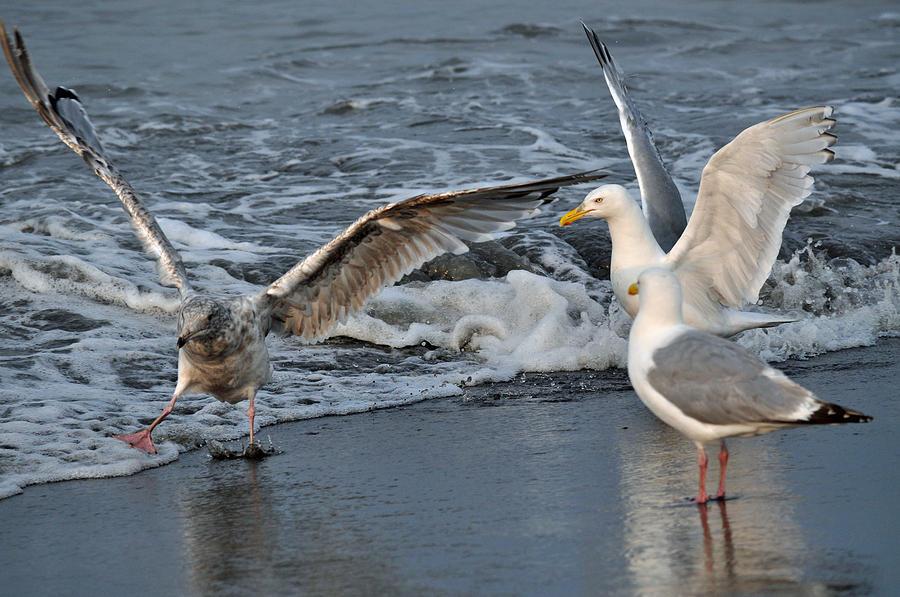 Seagulls Photograph - Seagull Treasures by Debra  Miller