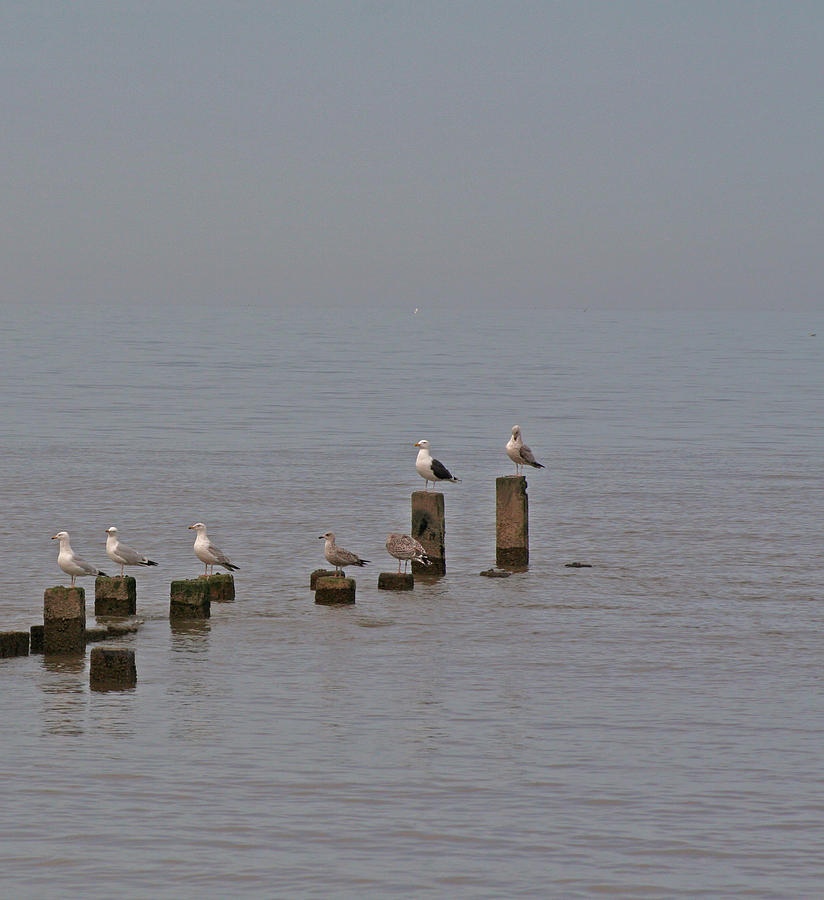 Seagulls At Rest Photograph  - Seagulls At Rest Fine Art Print