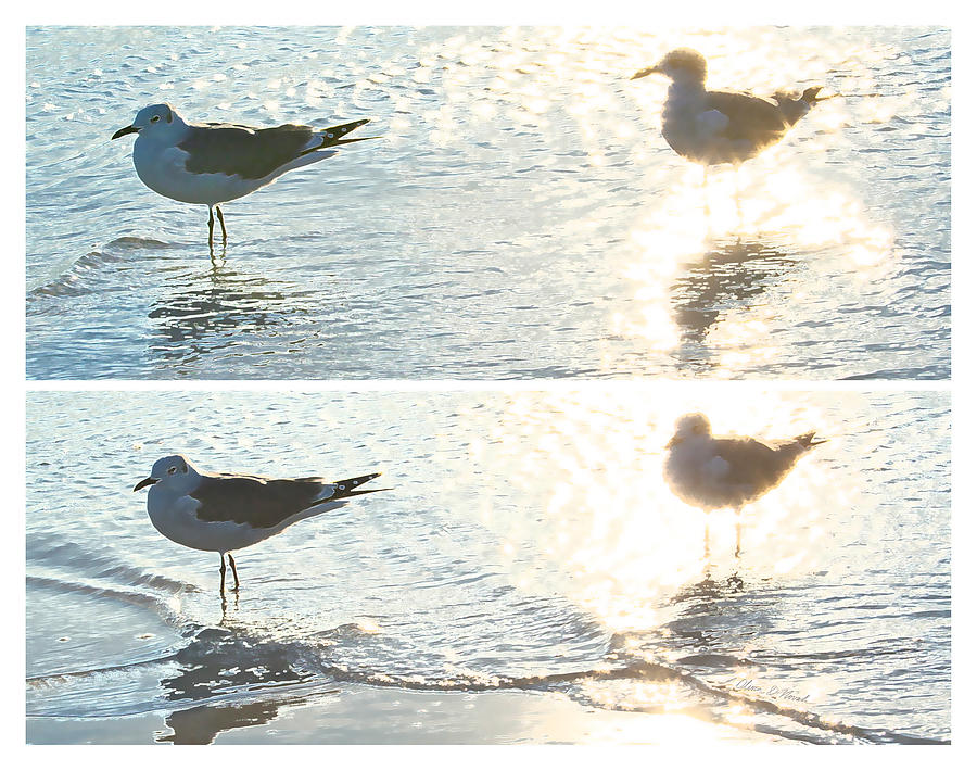 Seagulls In A Shimmer Two Views By Olivia Novak Mixed Media